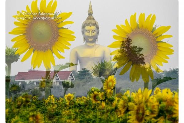Mobiz-Camera-Sun-Flower-002