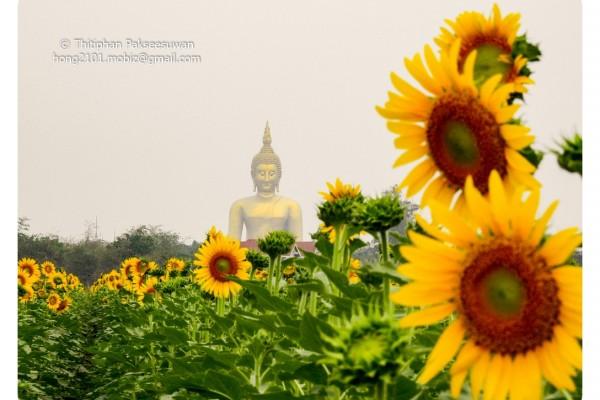 Mobiz-Camera-Sun-Flower-003