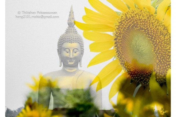 Mobiz-Camera-Sun-Flower-004