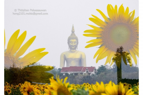 Mobiz-Camera-Sun-Flower-005