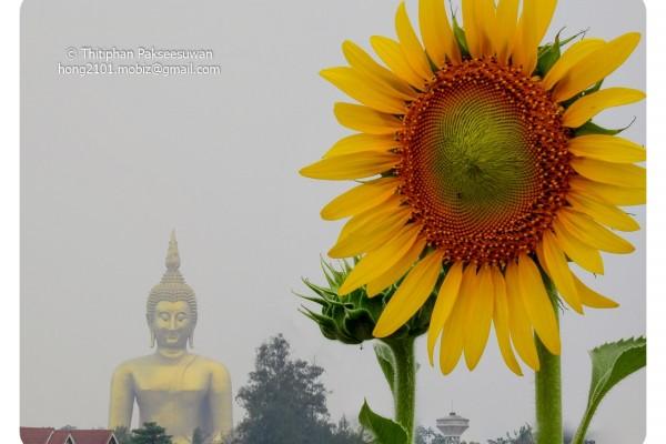 Mobiz-Camera-Sun-Flower-008