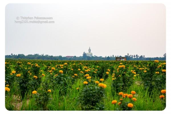 Mobiz-Camera-Sun-Flower-009